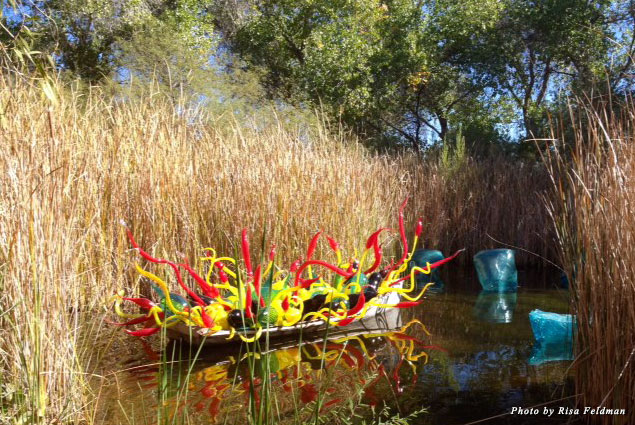 "Chihuly's ""Sonoran Boat and Blue Crystals"" in a pond at the Desert Botanical Garden"