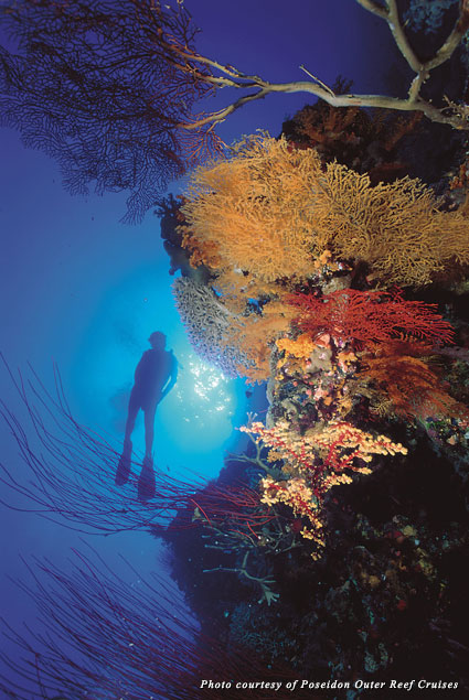 Diving at the Agincourt Ribbon Reefs