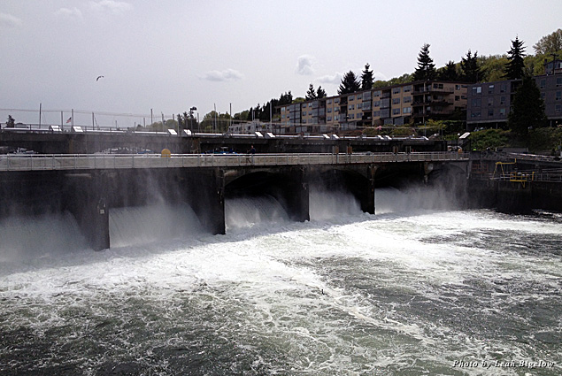 The spillway dam at the Hiram M. Chittenden Locks regulates freshwater levels of the ship canal and lakes
