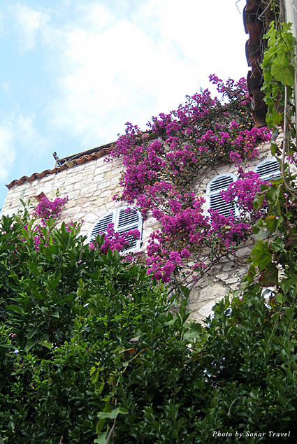 Vibrant purple flowers climb the walls of this medieval town