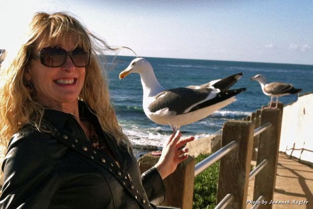 Brave birds along La Jolla coast
