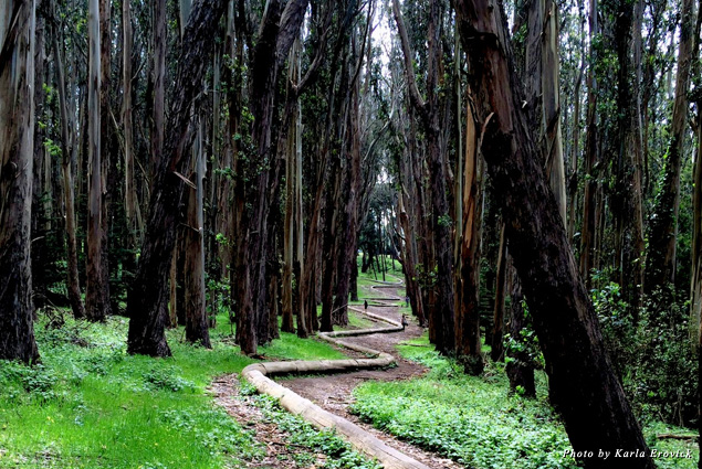 Tree-lined hiking trails abound in the Presidio