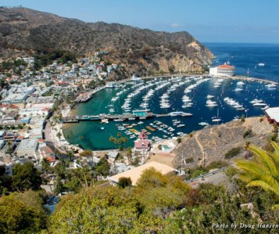 Overlooking Avalon and the harbor on Catalina Island