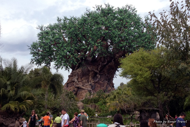 The giant 145-foot Tree of Life greets you as you enter Disney's Animal Kingdom