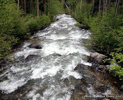 In and around Jackson Fork Ranch are rivers and creeks teeming with trophy cutthroat trout