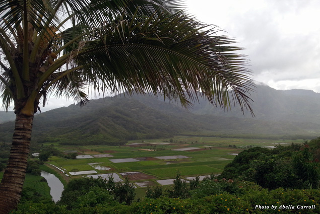 The scenic beauty of Hanalei's taro patches produce more than 60 percent of the taro used in Hawai'i's poi