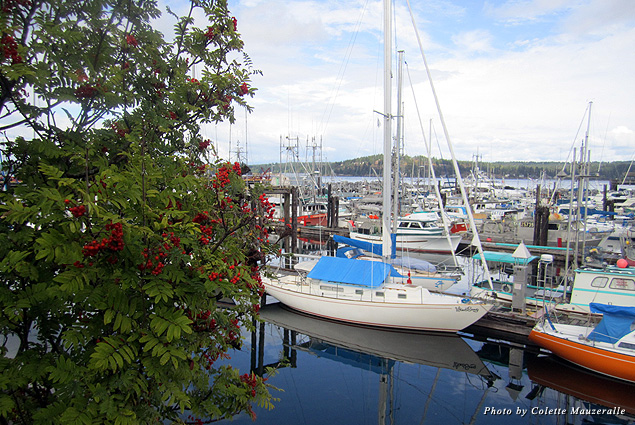 Campbell River's claim to fame is its walkable waterfront, where a marina full of boats is always in sight