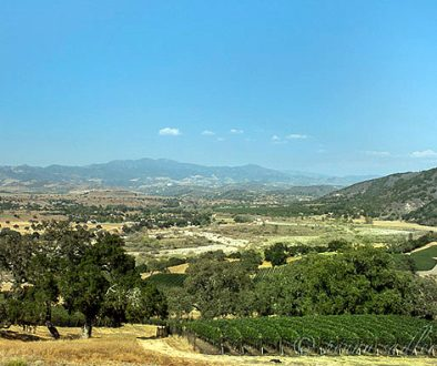 The landscape is Santa Ynez Valley as seen from Refugio Ranch Vineyards