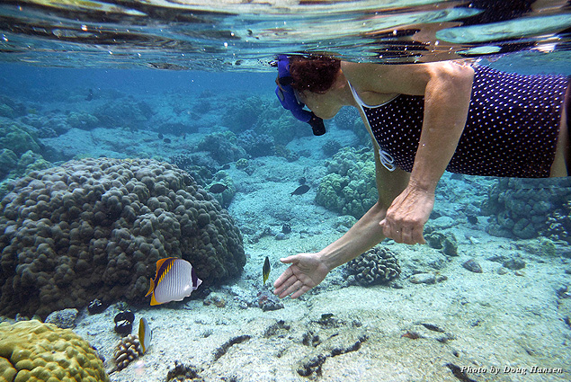 A snorkeler explores the coral reefs filled with fish at Kahalu'u Beach
