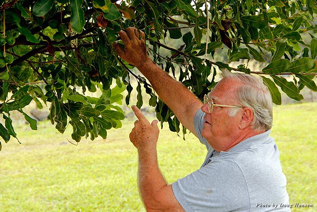 Big Island coffee farmer Phil Becker proudly shows visitors around his plantation