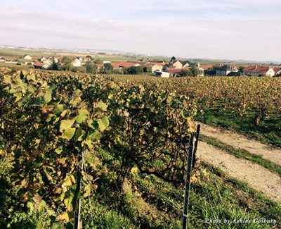 Vineyards in a small village outside of Reims, France