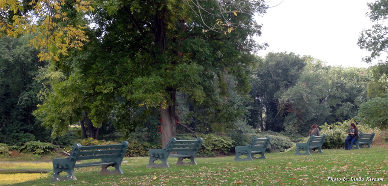 People sit at benches set among the trees