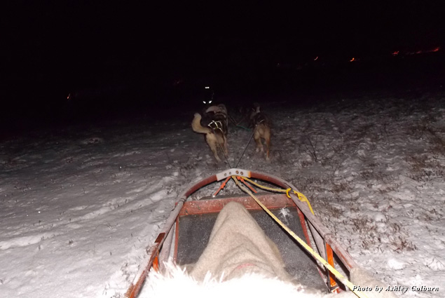 Riding in a dog sled