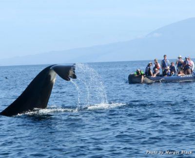 Spotting a whale during our boat tour with Ecoventura