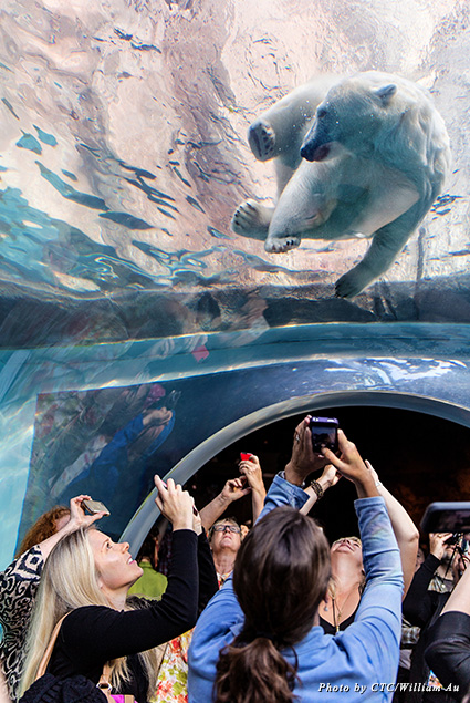 Visitors to the Journey to Churchill at Assiniboine Park Zoo take close-up photos of a polar bear
