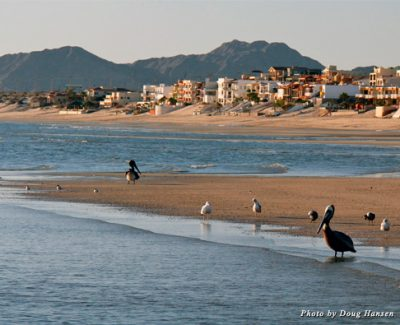 On our morning walk, we shared the beach with various sea birds