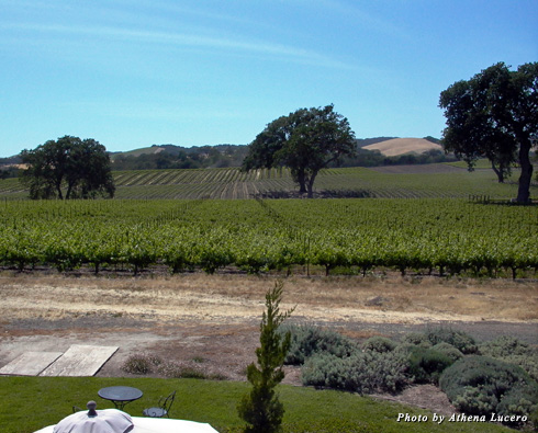 Guests at SummerWood Winery & Inn in Paso Robles enjoy summer landscapes of shady oak trees and rolling vineyards