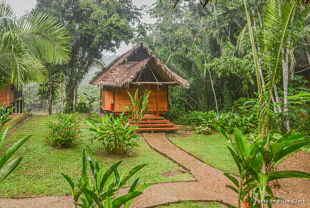 Cottage in the Amazon