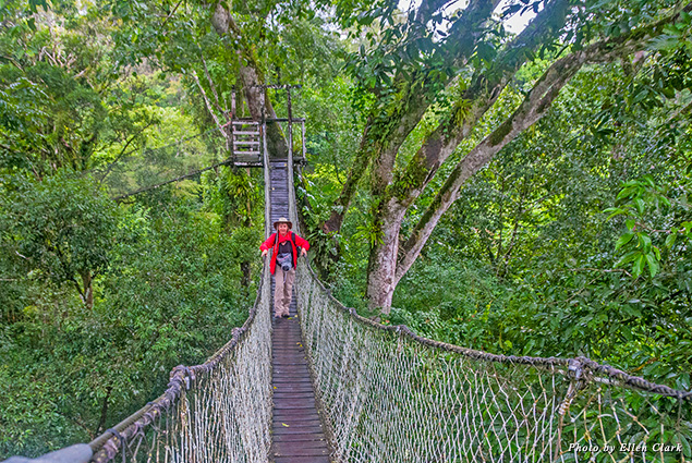 The canopy walk in the Amazon