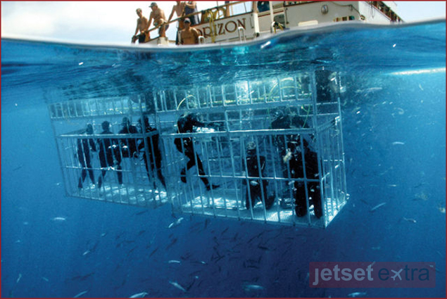 Isla Guadalupe shark cage diving