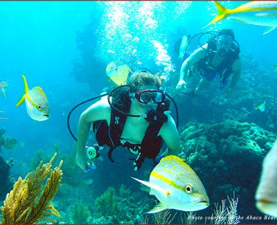Divers explore coral reefs near Abaco Island