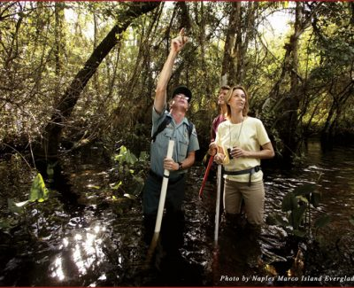 Visitors marvel at the wonders of the Fakahatchee Strand, the world's largest tropical swamp