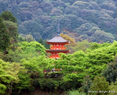 A building peeks out above the trees in Kyoto, Japan