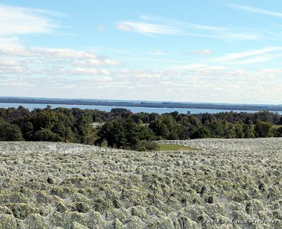 Many of the vineyards of the Traverse City area provide beautiful views over the bays