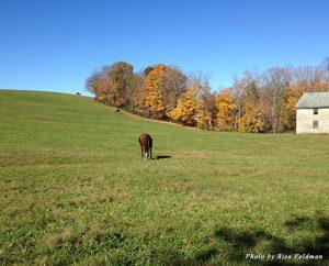 A horse farm in Kentucky